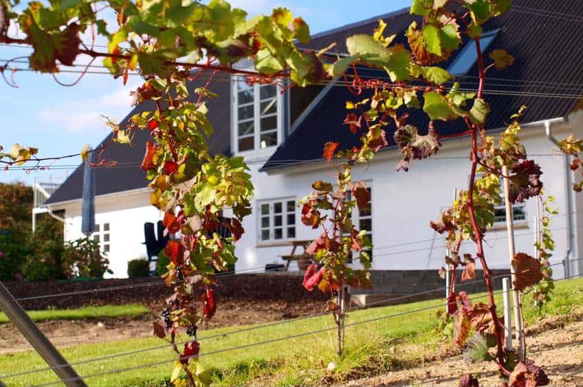 Oplev en dansk vingård hos MODAVI i Kolding